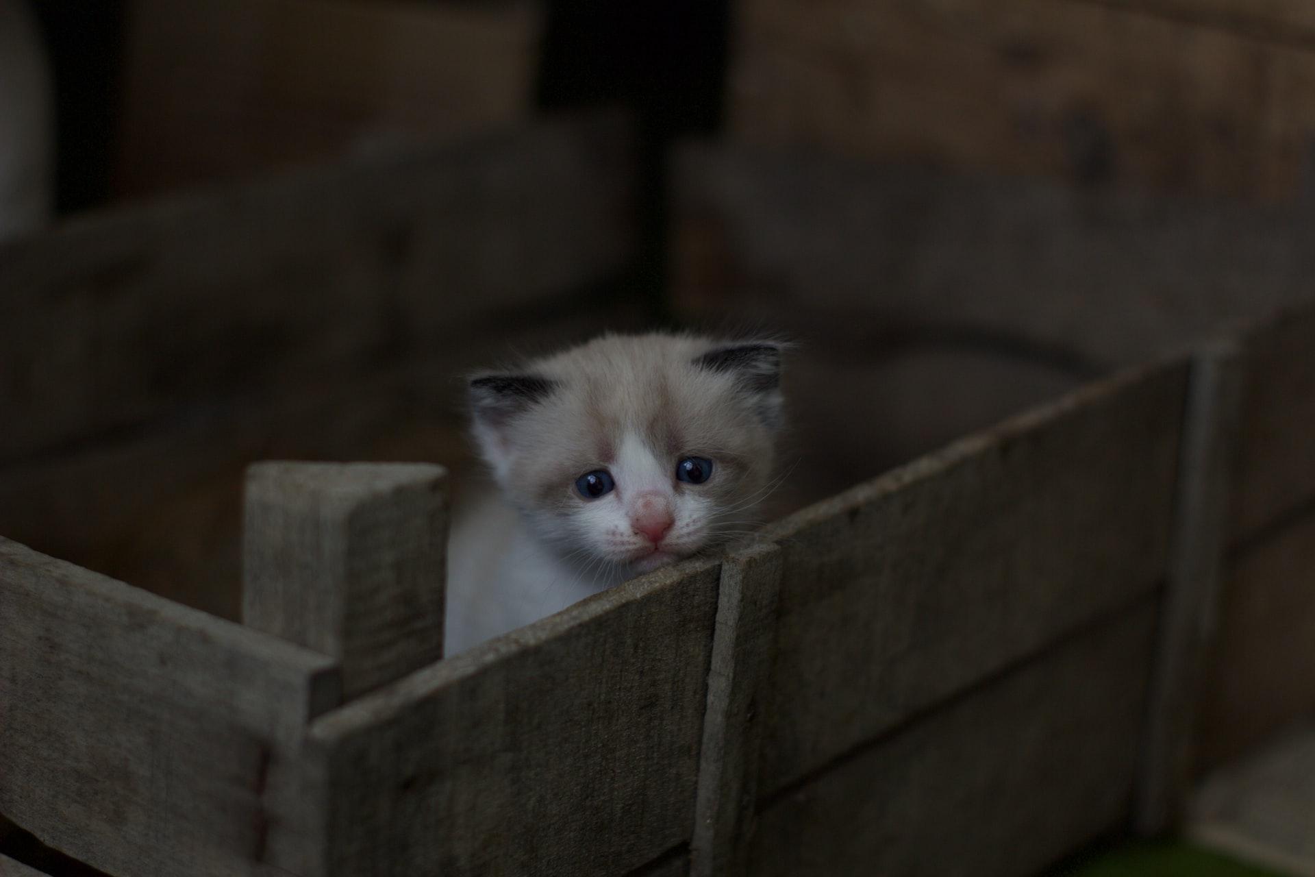 Com quantos dias gatos abrem os olhos