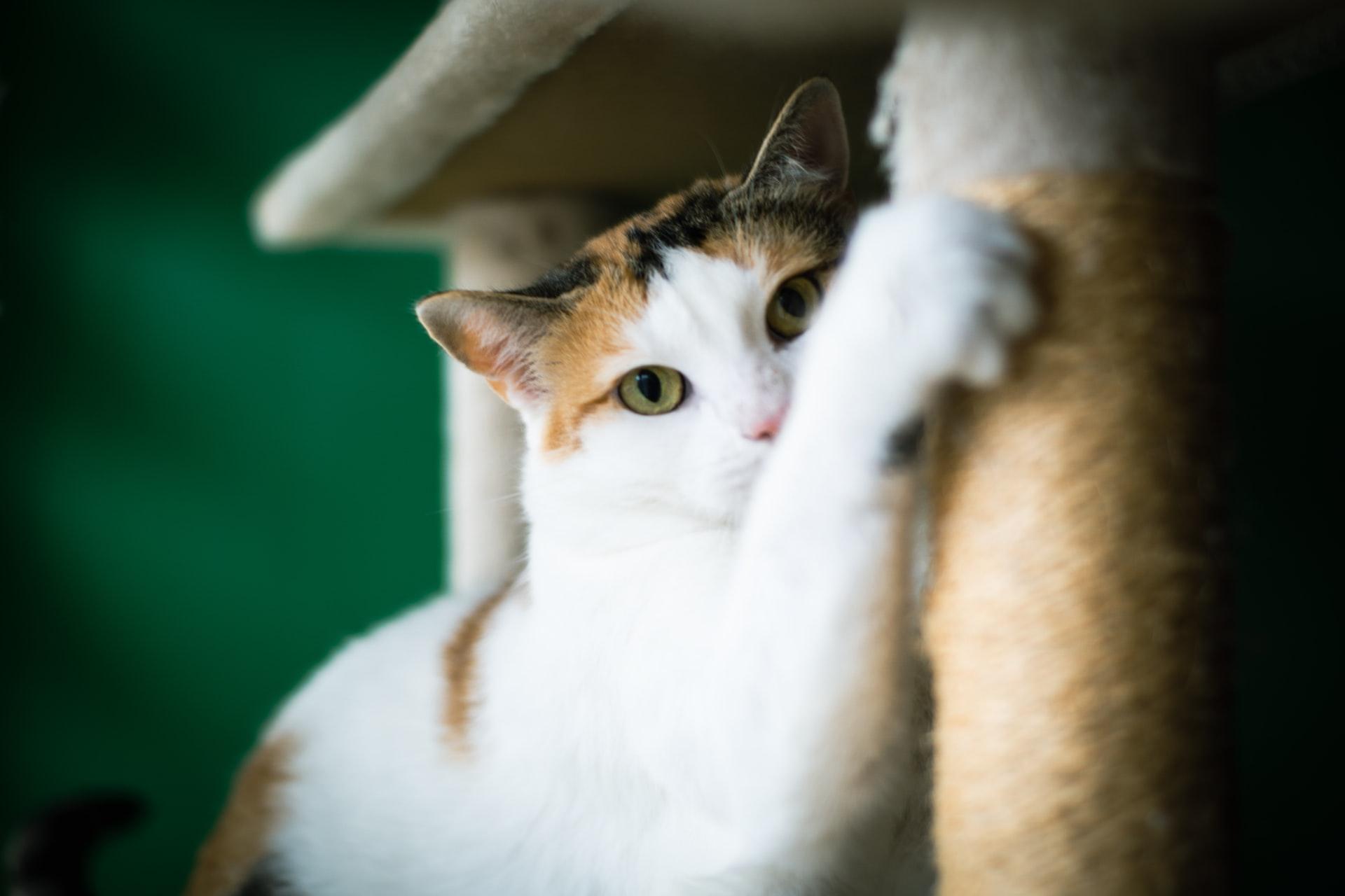 O que faz o gato feliz?