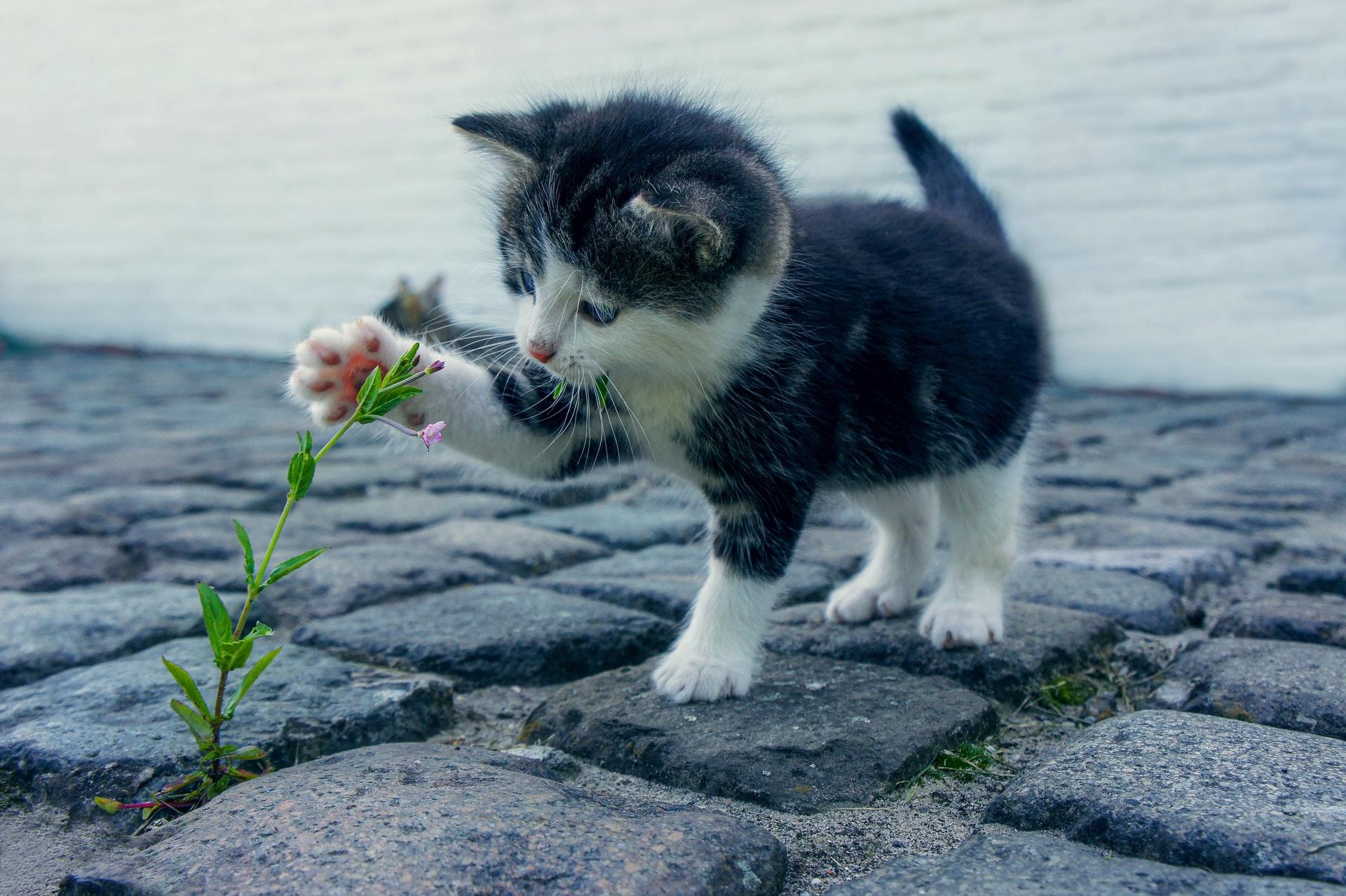 Gato pode sair na rua?