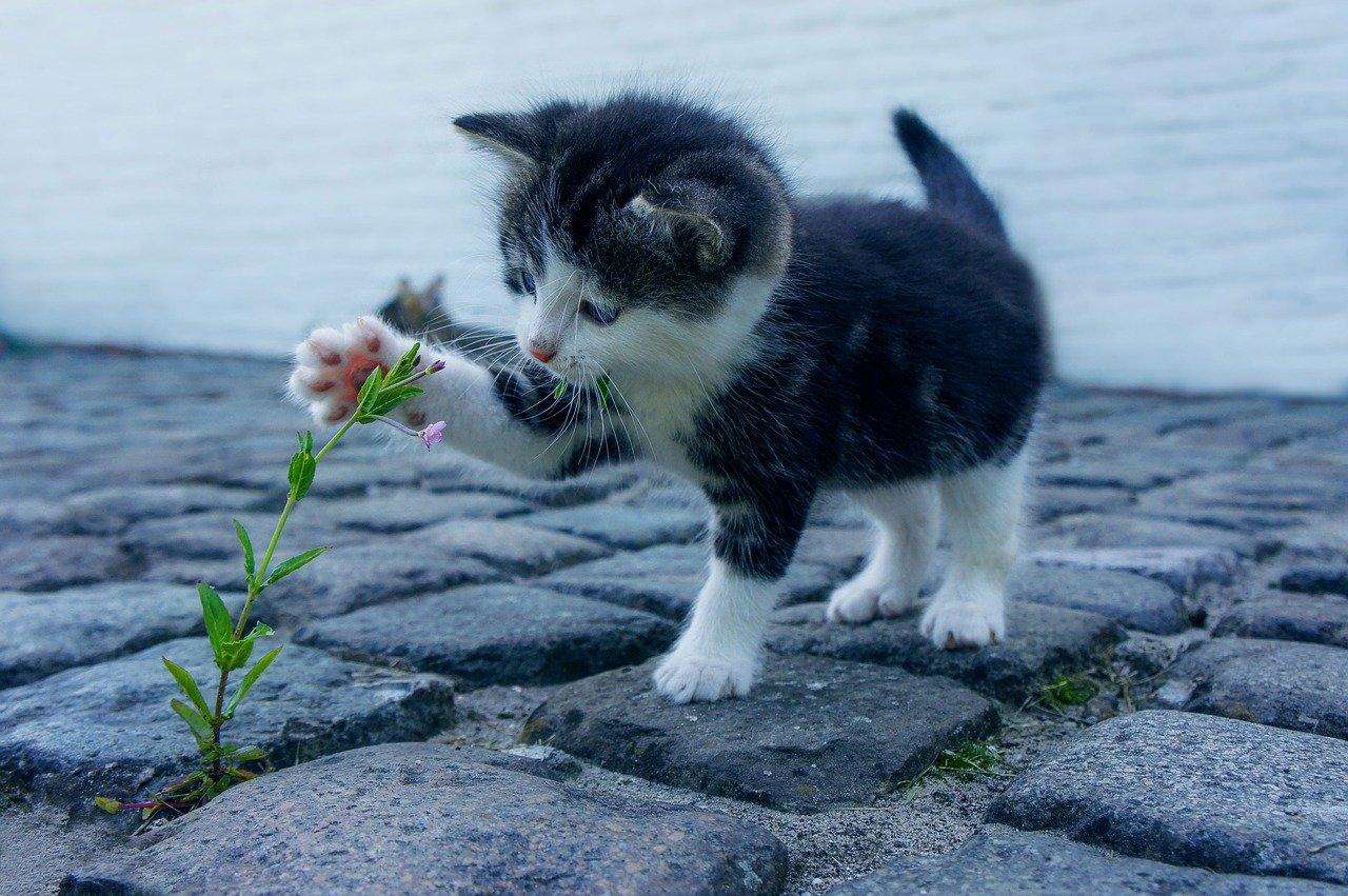 Veja como brincar com gatos