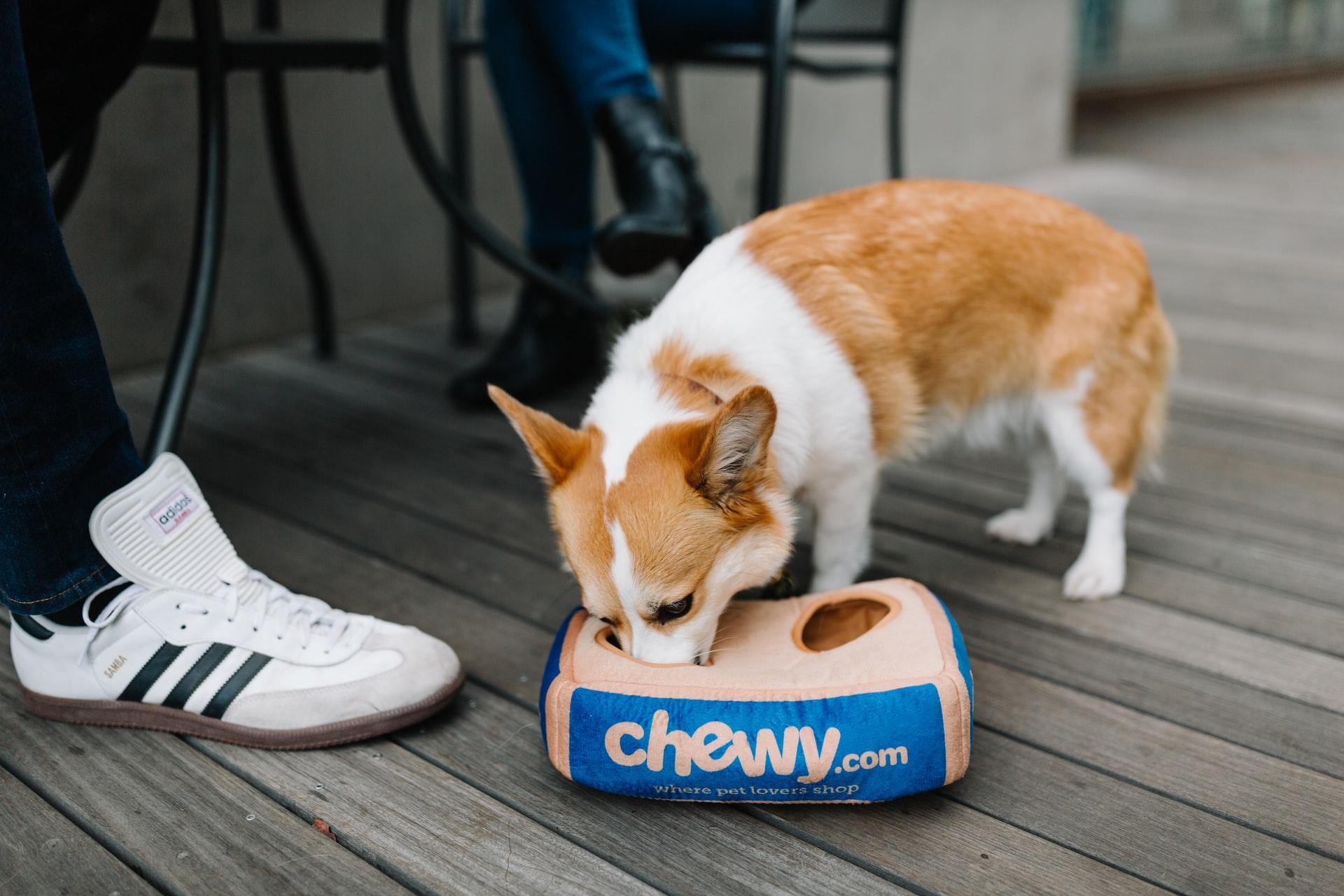 Melhores marcas de ração para cachorro