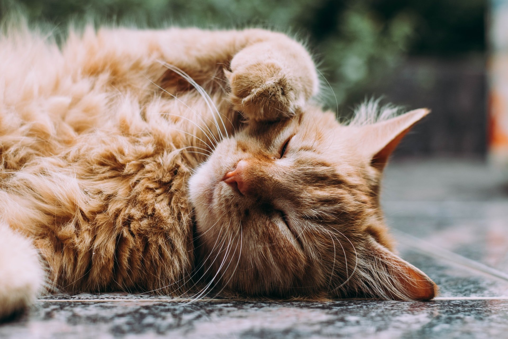 Quantos anos vive um gato?