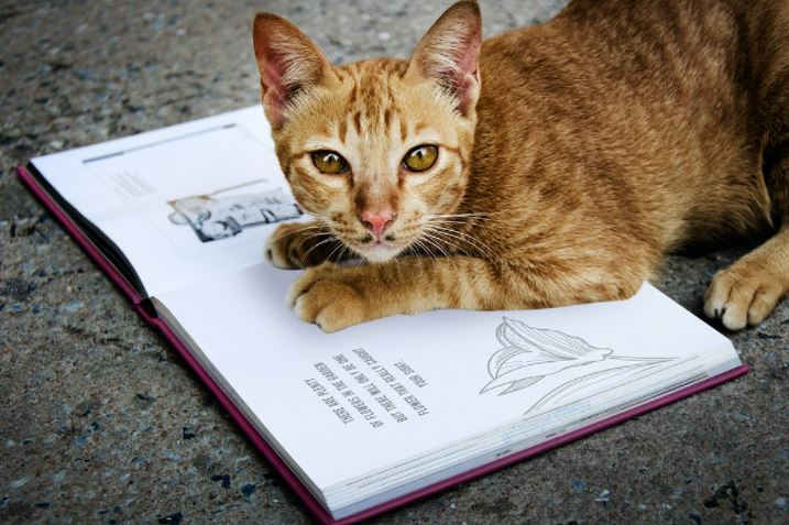 Veja as raças de gatos preferidas