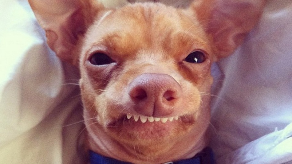 Cachorros famosos no Instagram - Tuna - @tunameltsmyheart