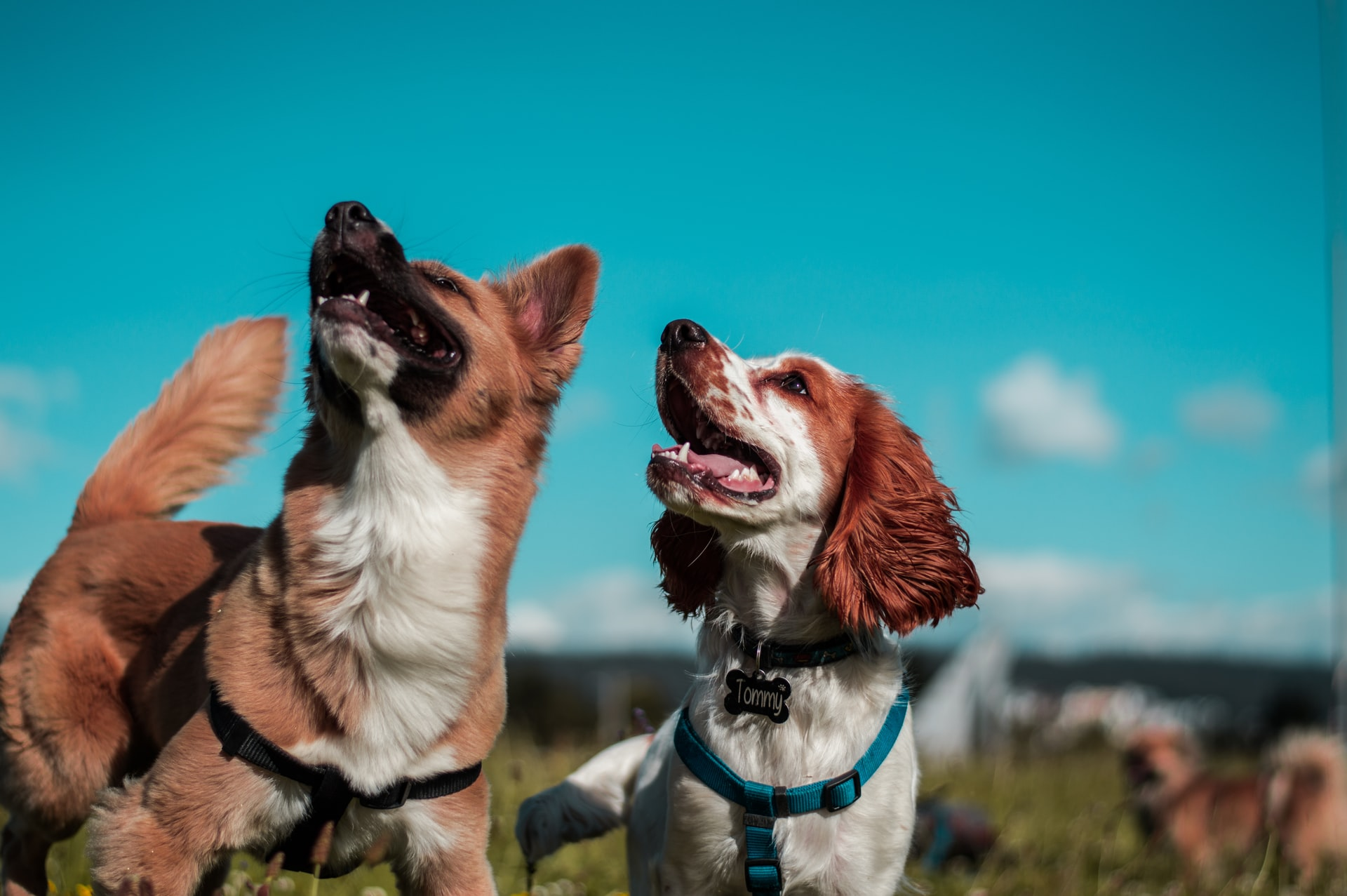 Raças de cachorros