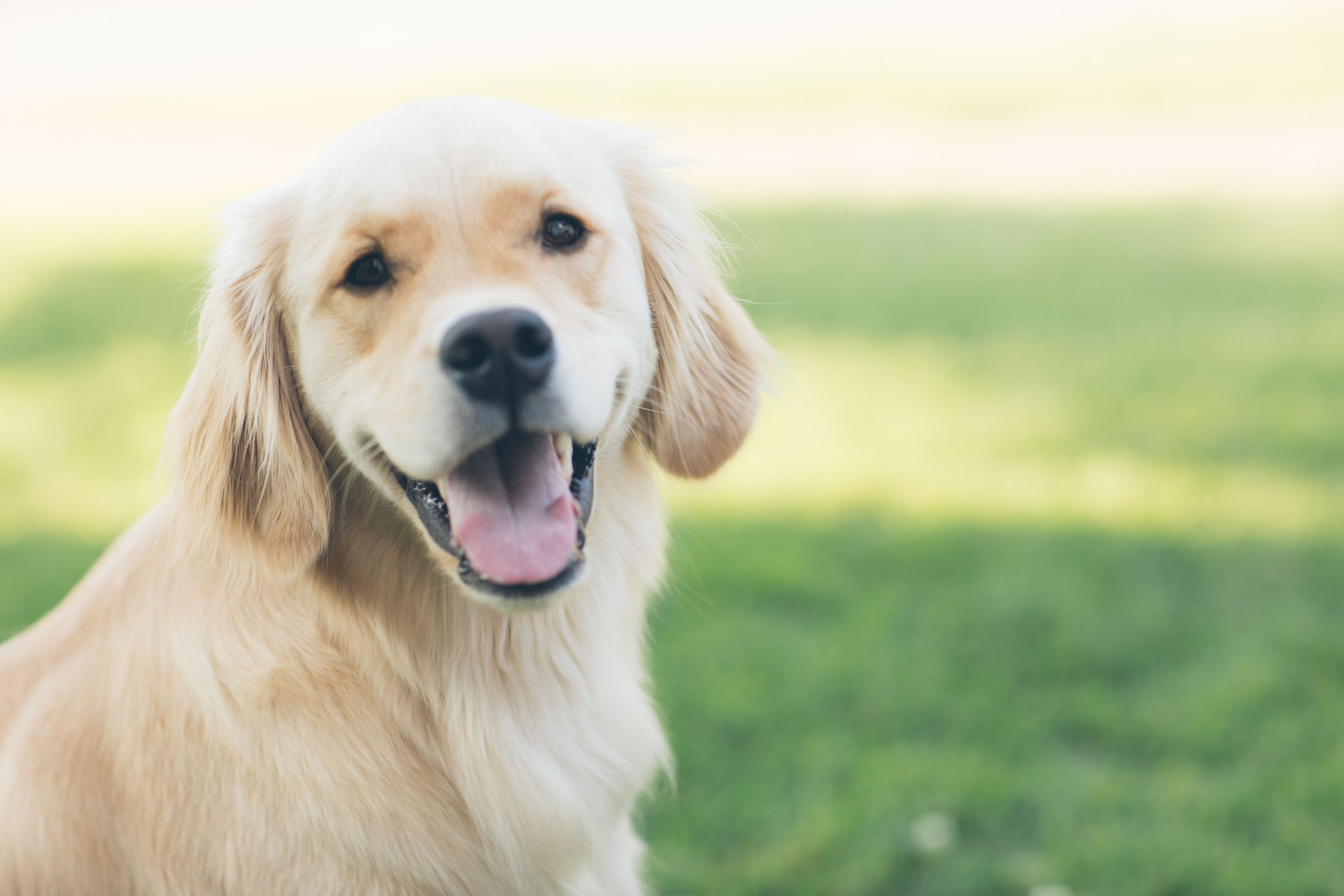 Criar um cachorro calmo