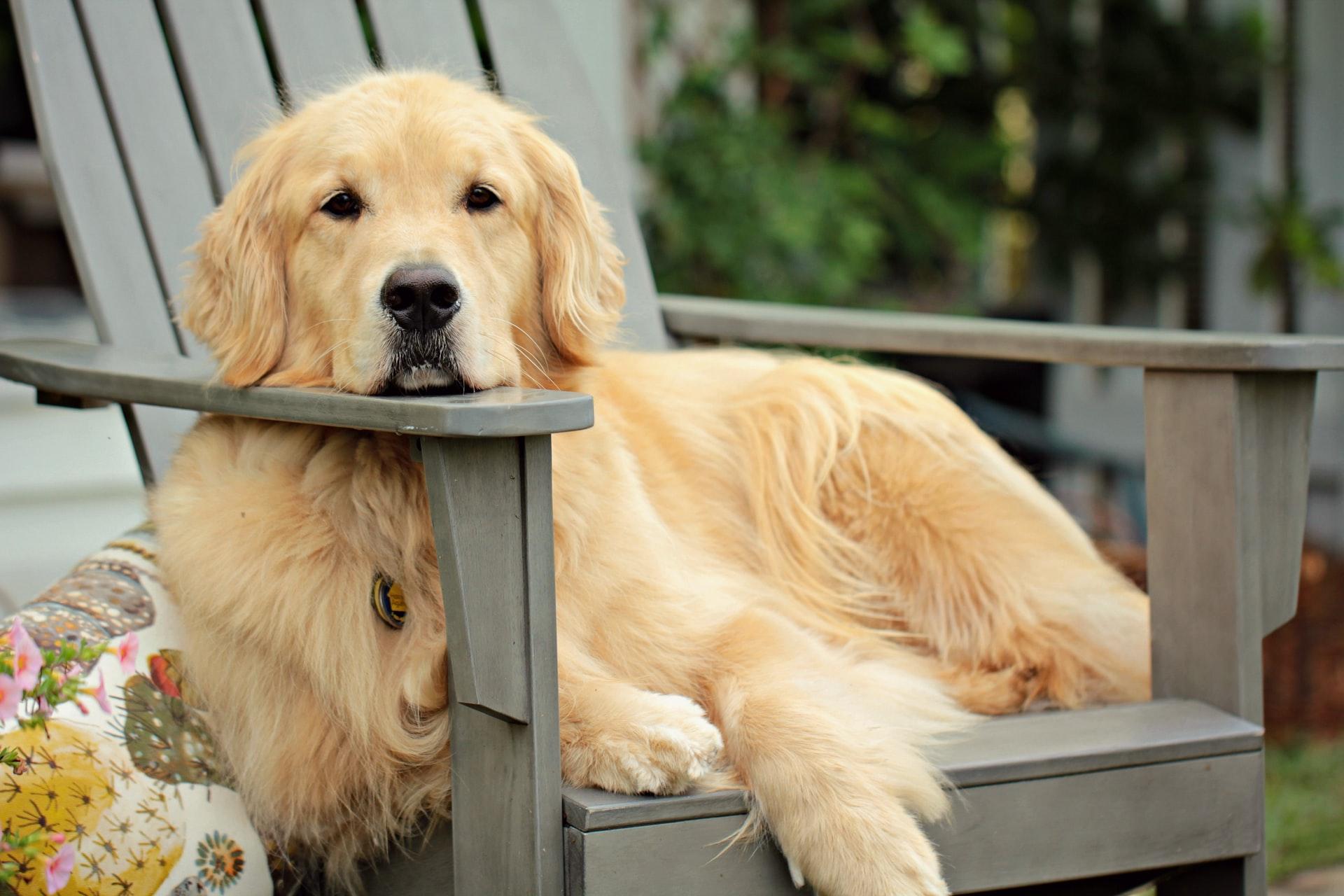 Descubra quais são os cachorros mais fofos de todas as raças
