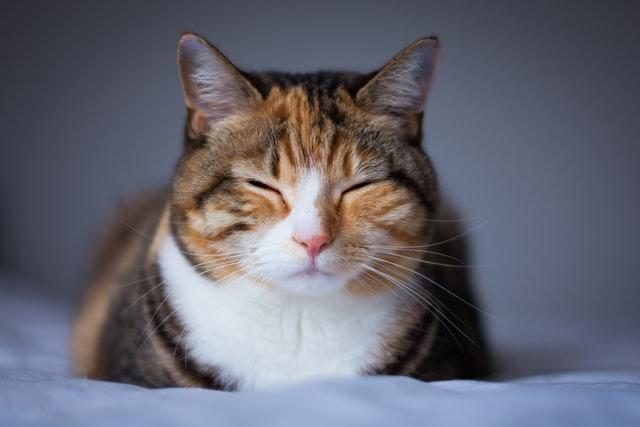 como saber a idade de um gato