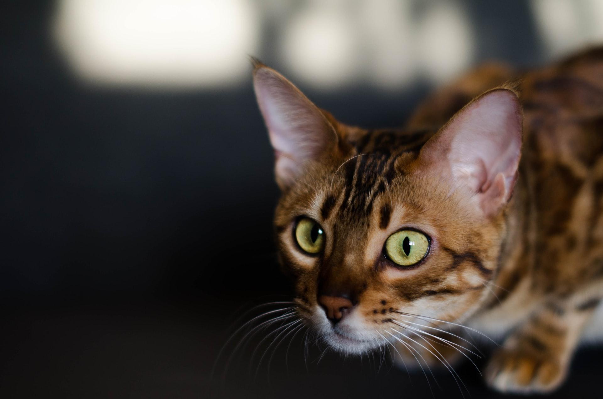 Arranhão de gato causa infecções? Veja 5 informações importantes!