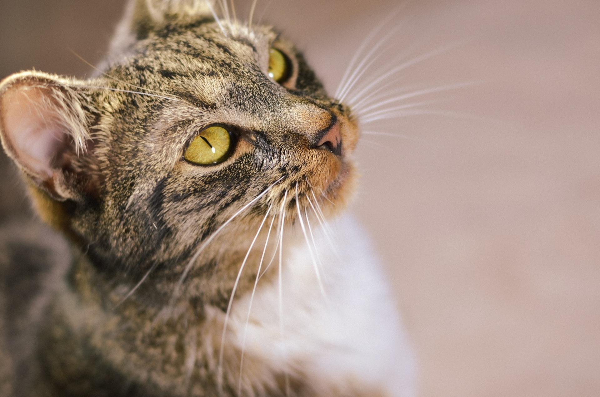 Descubra tudo o que precisa para fazer um gato feliz