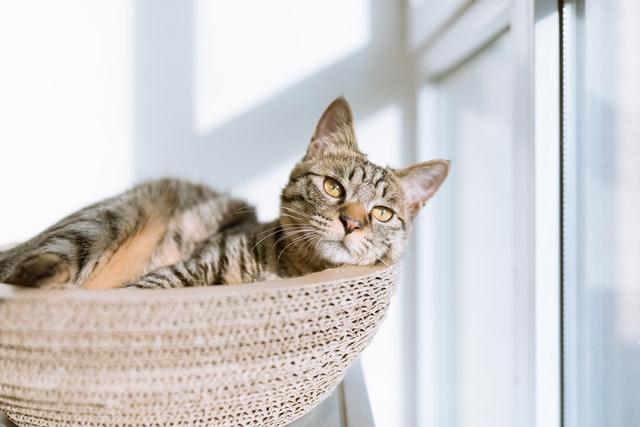 Descubra como saber a idade de um gato
