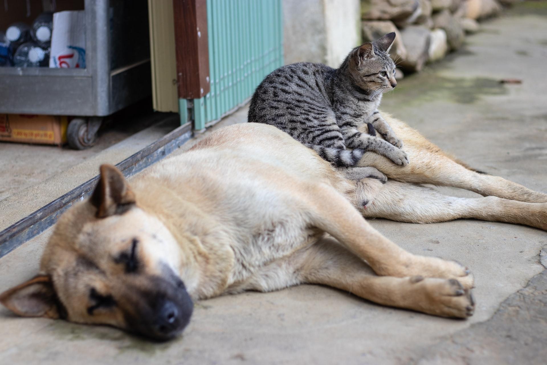 Plano de saúde para animais Pet Mais Vida