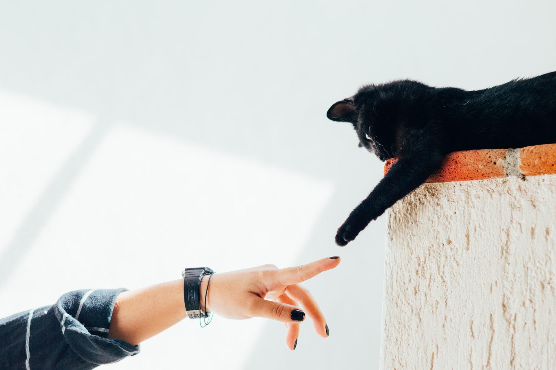 Tirar pelo de gato da roupa